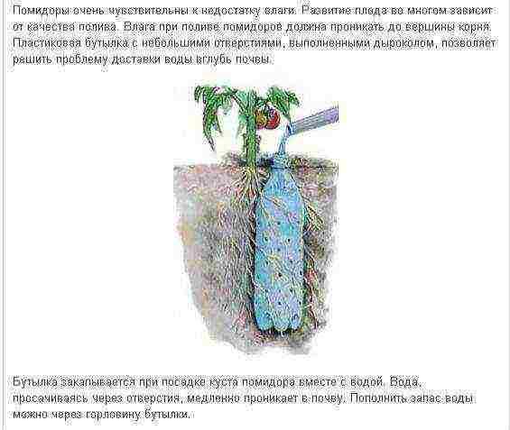 Как поливать рассаду помидоров в домашних условиях до пикировки и после наиболее правильно | теплотехники