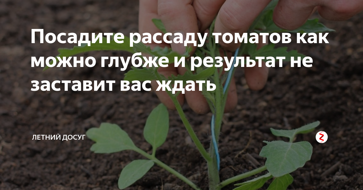 Посадка помидоров в открытый грунт: схемы расположения томатов и уход за ними, а также как правильно, на каком расстоянии и после чего следует их размещать? русский фермер