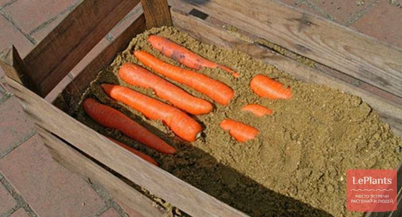 Вяленая морковь на зиму. как засушить в духовке, сохранив все витамины, рецепт с фото