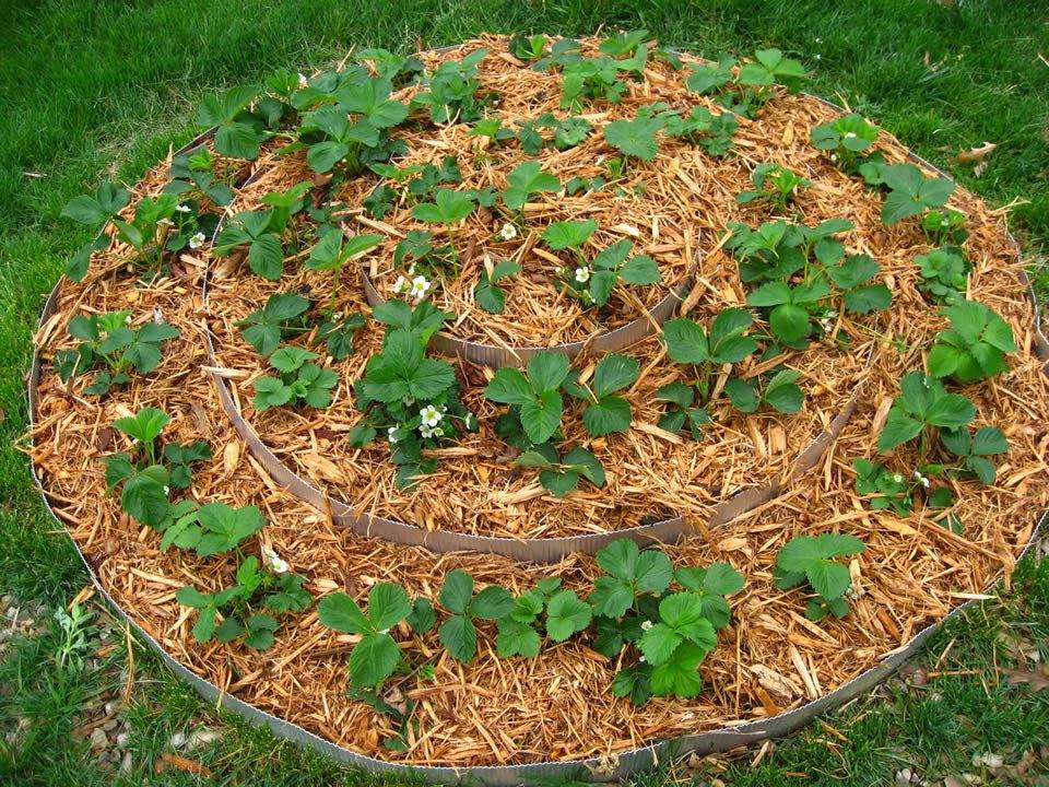 Мульчирование 4 важных правила - огород природное земледелие