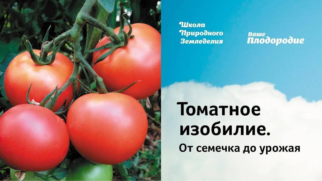 Агротехника томатов шаста f1