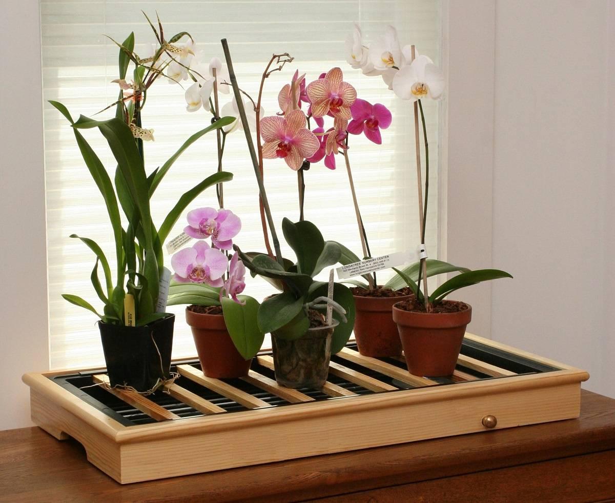 Главный вопрос: можно ли поливать орхидею обычной водой и какие разные способы полива существуют?