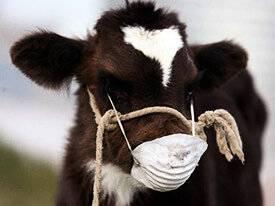 Рекомендации по правилам взятия проб крови от крупного рогатого скота
