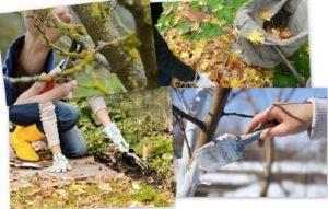 Уход за яблонями осенью: обрезка, подкормки, борьба с болезнями и вредителями, подготовка к зиме