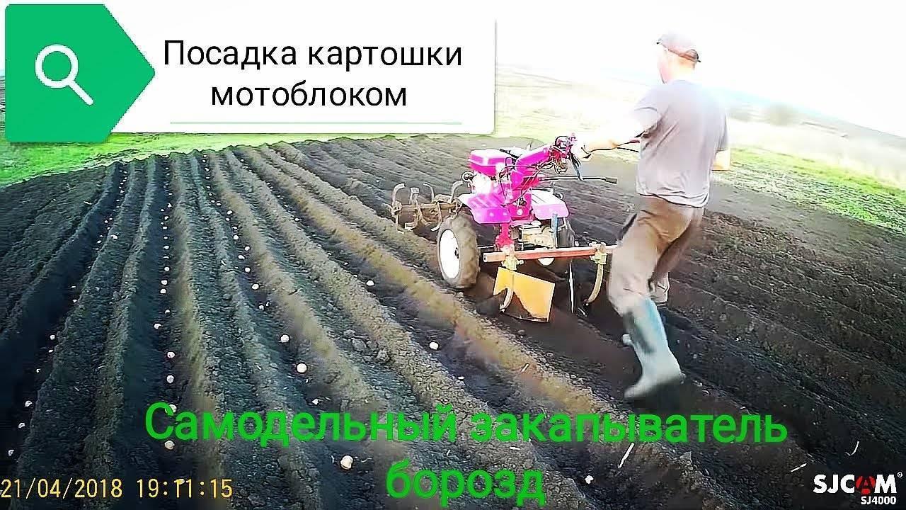 Выбор и правильное использования мотоблока для картофеля