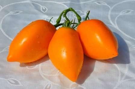 Сорта томатов: кенигсберг