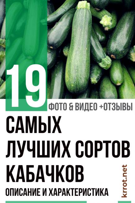Как выглядит кабачок: рассада и ростки, сколько весит плод среднего размера и какую корневую систему имеет