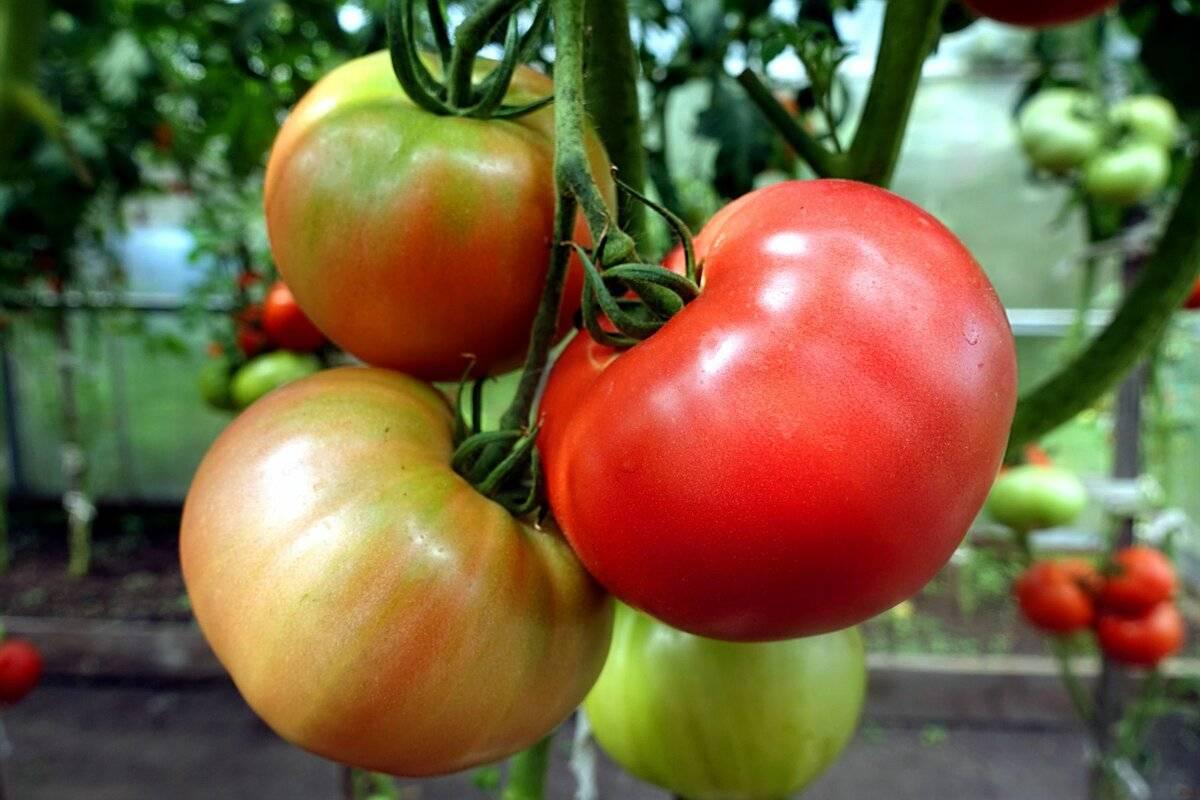 Когда садить помидоры на рассаду в сибири по лунному календарю 2021 года