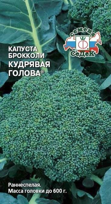 Как вырастить брокколи на огороде - пошаговая инструкция!