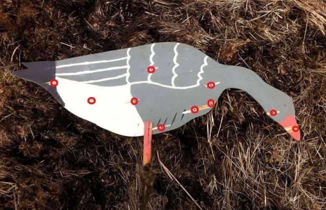 Весенняя охота на гуся. правила, советы, способы - промысловик.инфо