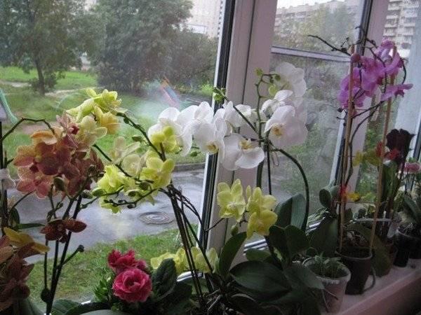 Как пересадить орхидею? 24 фото как правильно пересаживать цветущее растение в домашних условиях? пошаговая пересадка орхидеи в новый горшок после покупки