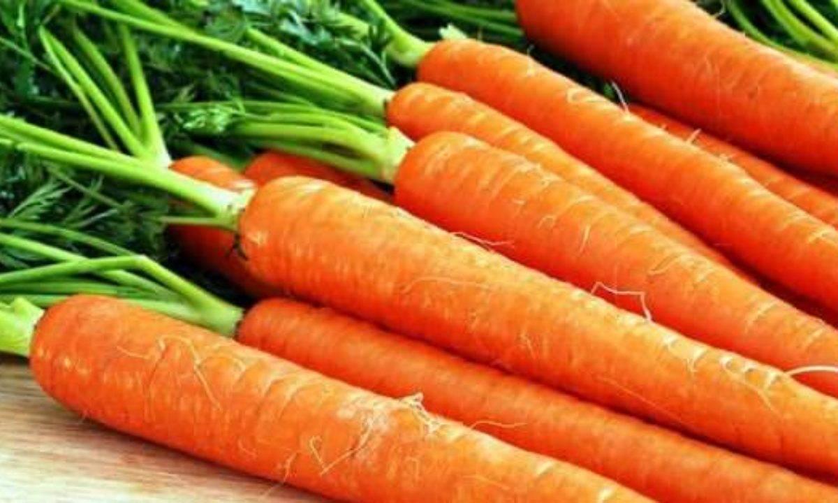 Биологические особенности моркови - секреты садоводов