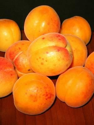 Абрикос самоплодный: сорта фрукта с фото и описанием