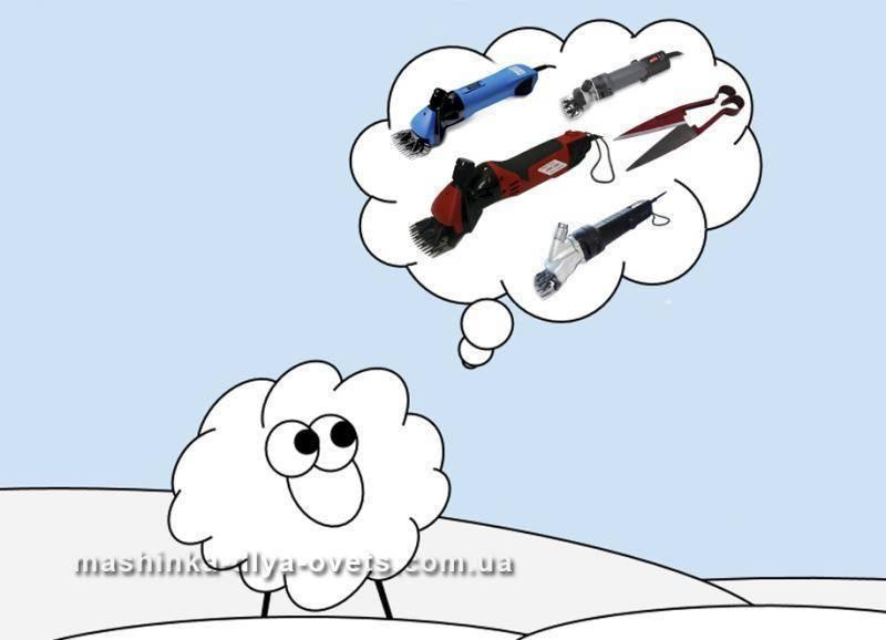 Всё о стрижке овец. когда, как и чем подстригать.
