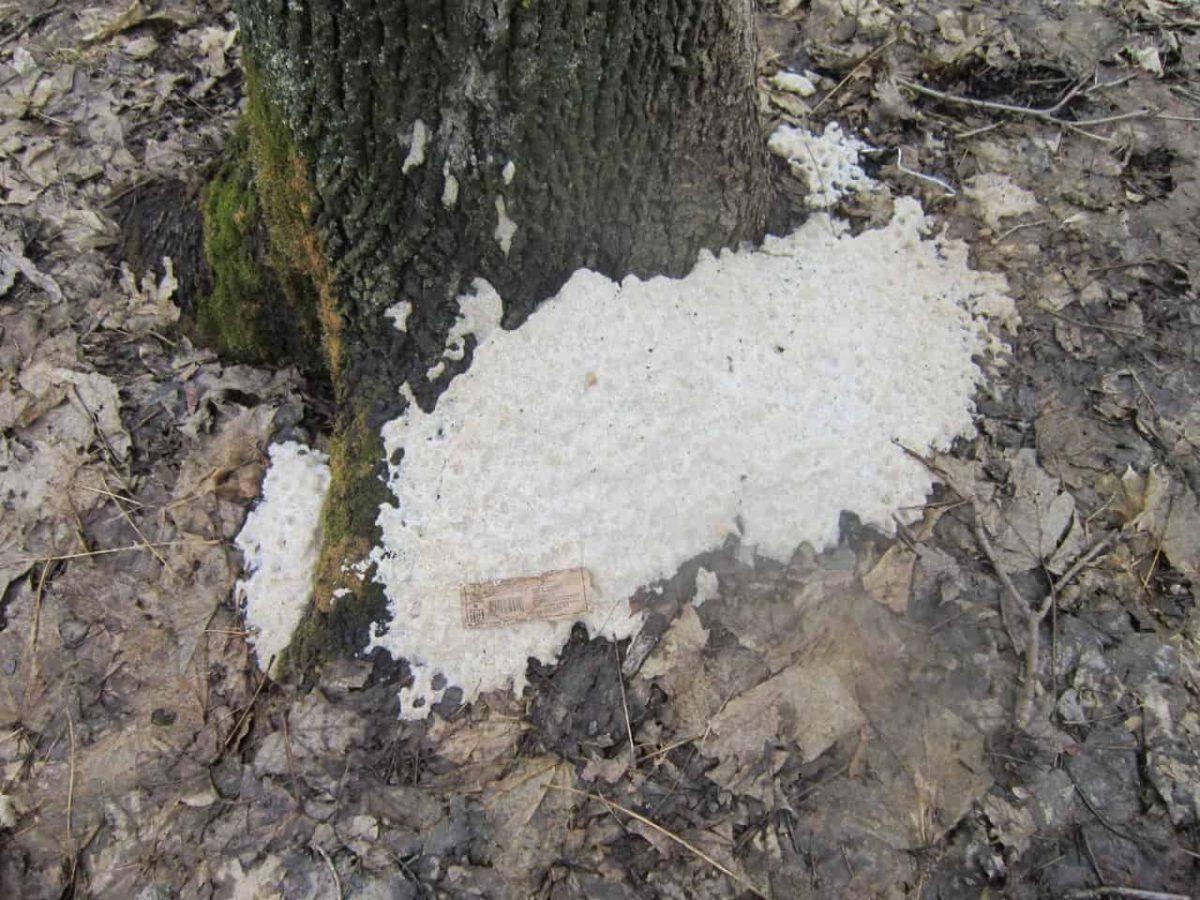 Как засушить и уничтожить дерево на корню незаметно