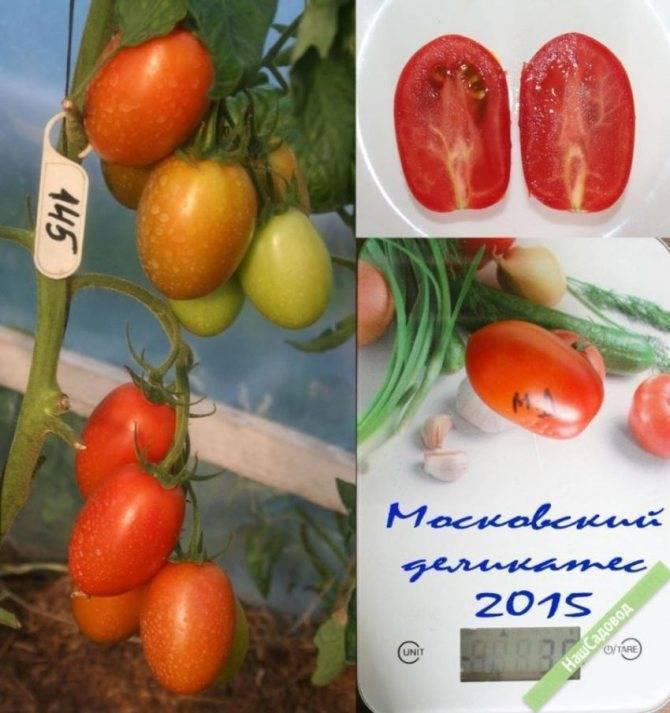 Выращиваем отечественный помидор «московский деликатес»: описание, характеристика и фото сорта