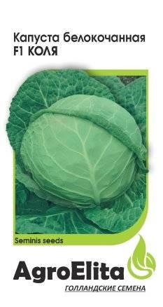Капуста колобок: описание сорта, фото, отзывы, характеристика, урожайность, особенности выращивания