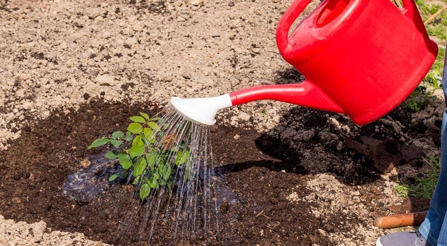 Железный купорос: применение в садоводстве, инструкция, что это и для чего