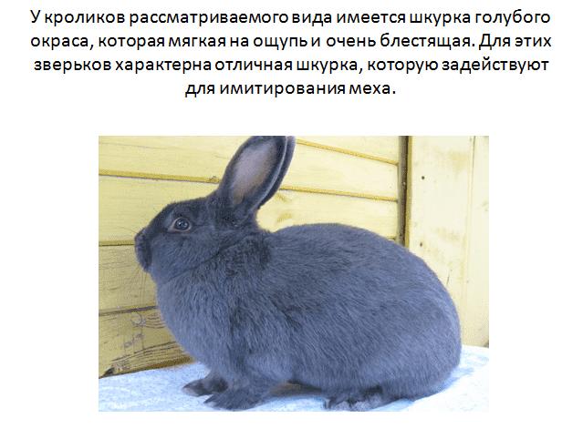 Как определить сукрольность крольчихи?