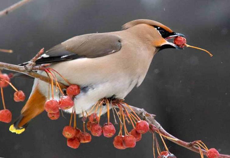 Как выгнать птиц из-под крыши дома: 5 проверенных способов
