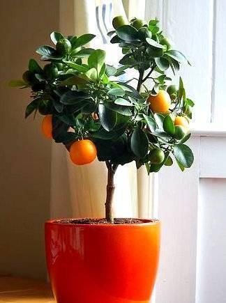 Дерево счастья из камней по фэн-шуй: значение талисмана и активация