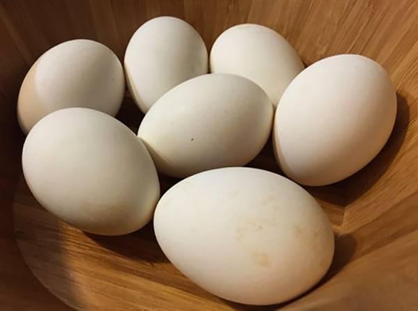 Гусиные яйца - польза, способы хранения и лучшие рецепты вкусных блюд