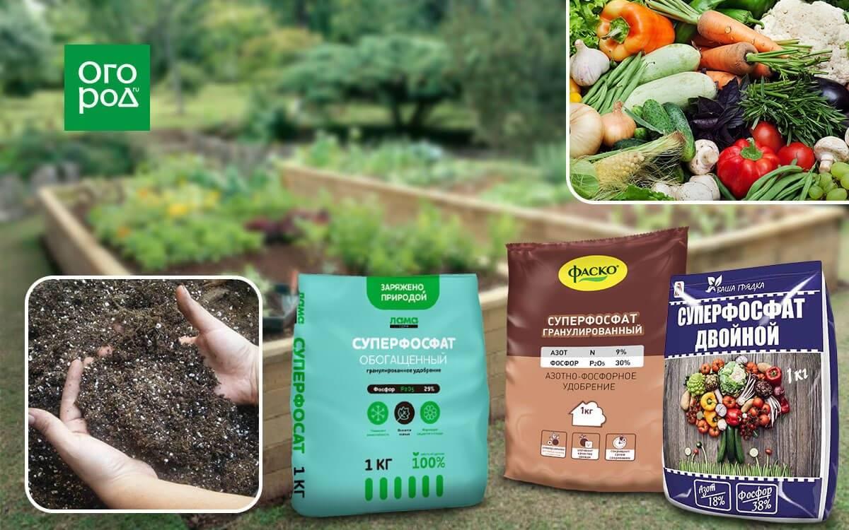 Лучшие комплексные удобрения для томатов: активаторы роста и минеральные удобрения, советы по применению