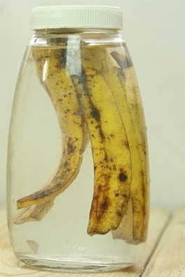 Банановая кожура: ценное удобрение, эффективное средство от тли и пыли на листьях   комнатных растений
