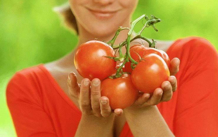 К чему снятся красные помидоры: девушке, женщине, беременной, мужчине – толкование по разным сонникам