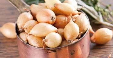 Достоинства лука сорта бамбергер и особенности его выращивания