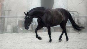 Буланая масть лошади: описание фото | мои лошадки