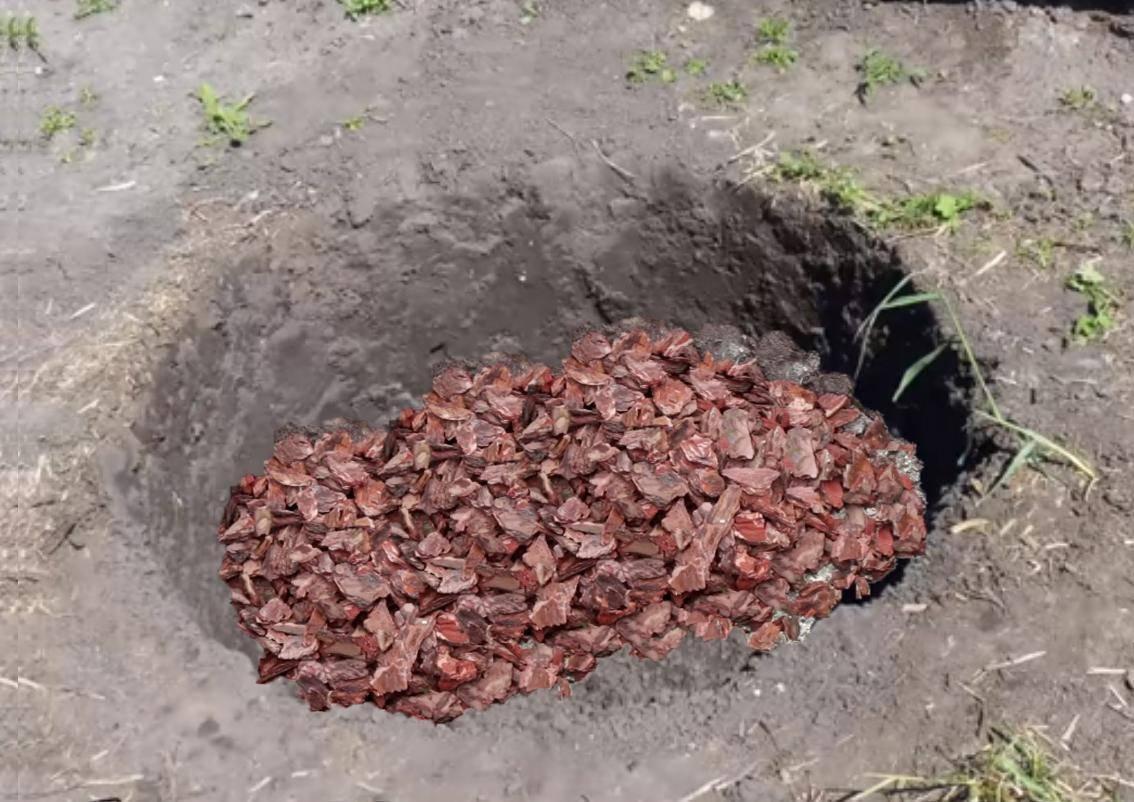 Боярышник: уход и посадка, размножение боярышника, выращивание растения в открытом грунте