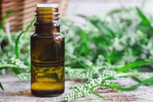 Масло полыни: полезные и лечебные свойства, вред, применение полынного масла