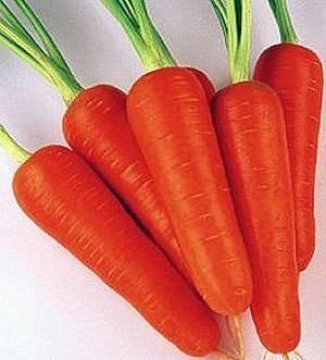Сорта моркови для хранения на зиму: какой лучше выбрать для длительного содержания, о ранних, средних и поздних, сладких видах овоща, как подобрать для сибири и урала? русский фермер
