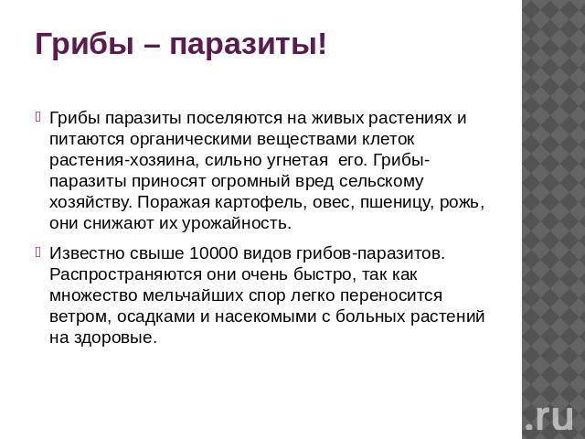 Защита от грибов | fermer.ru - фермер.ру - главный фермерский портал - все о бизнесе в сельском хозяйстве. форум фермеров.