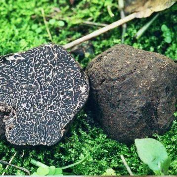 Драгоценный гриб. почему трюфели такие дорогие