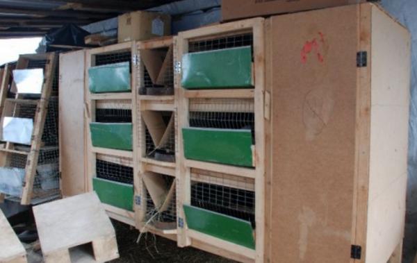 Функциональный дом для кролей — клетка михайлова