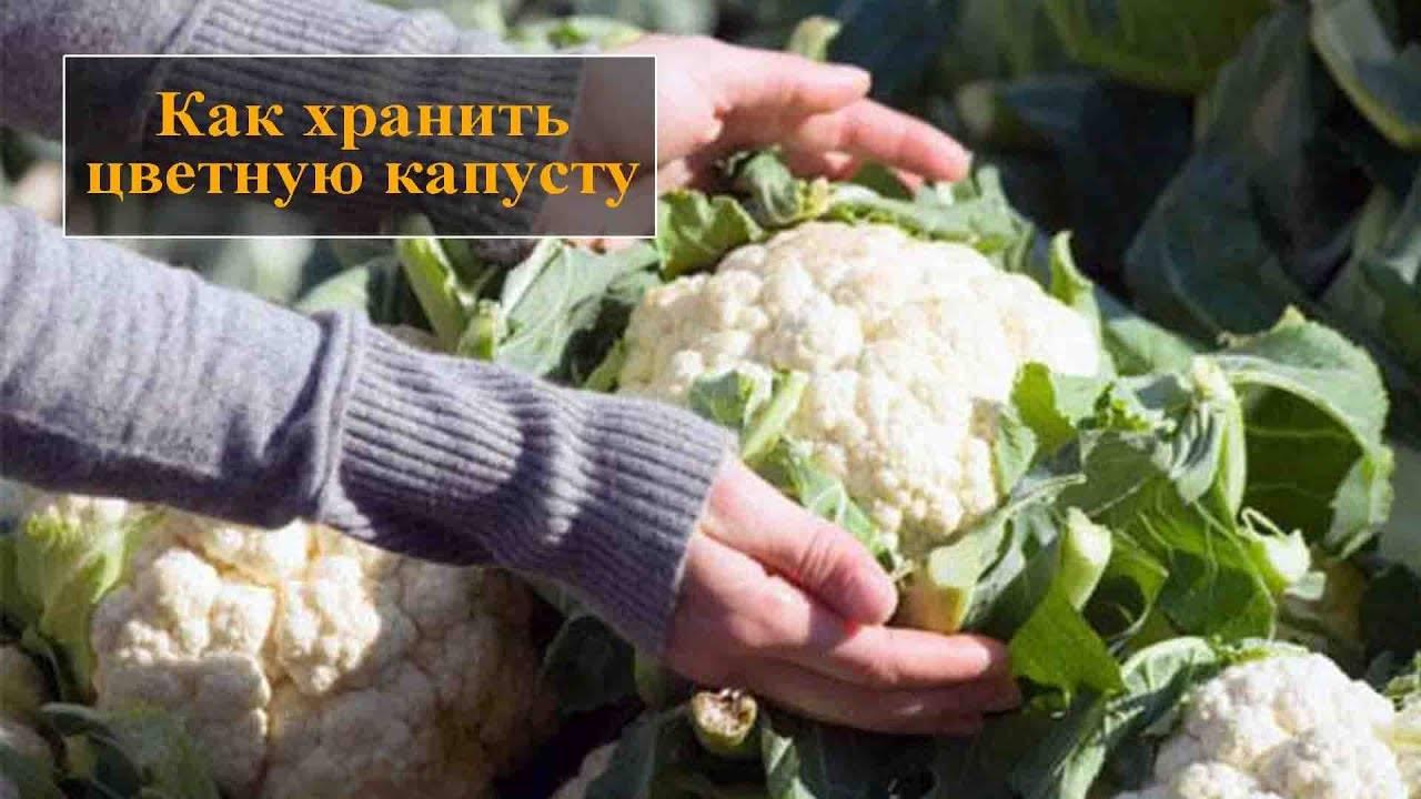 Как хранить цветную капусту на зиму в погребе и в банке