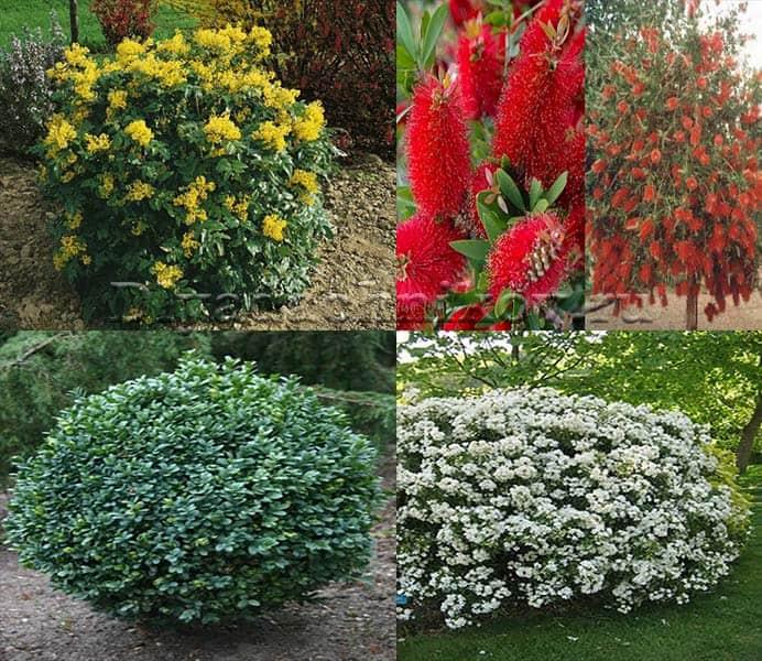 Топ 10 вечнозеленых растений для дачи