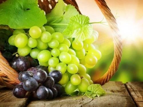 Зеленые сорта винограда с описанием и фото