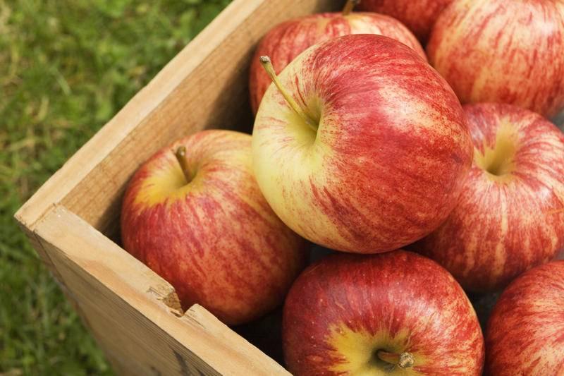 Самые сладкие сорта яблонь: выбираем лучшие вкусные плоды