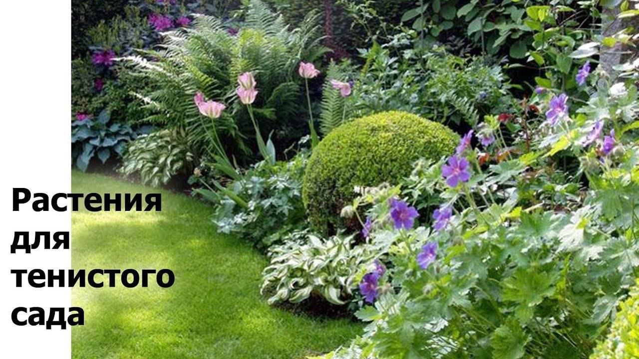 Какие цветы можно посадить в тени, в том числе многолетние: подборка с фото