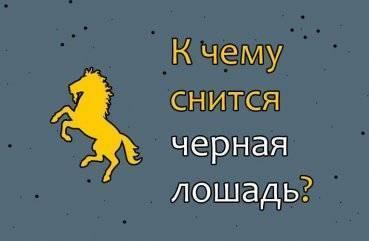 Сонник лошадь жеребенком. к чему снится лошадь жеребенком видеть во сне - сонник дома солнца