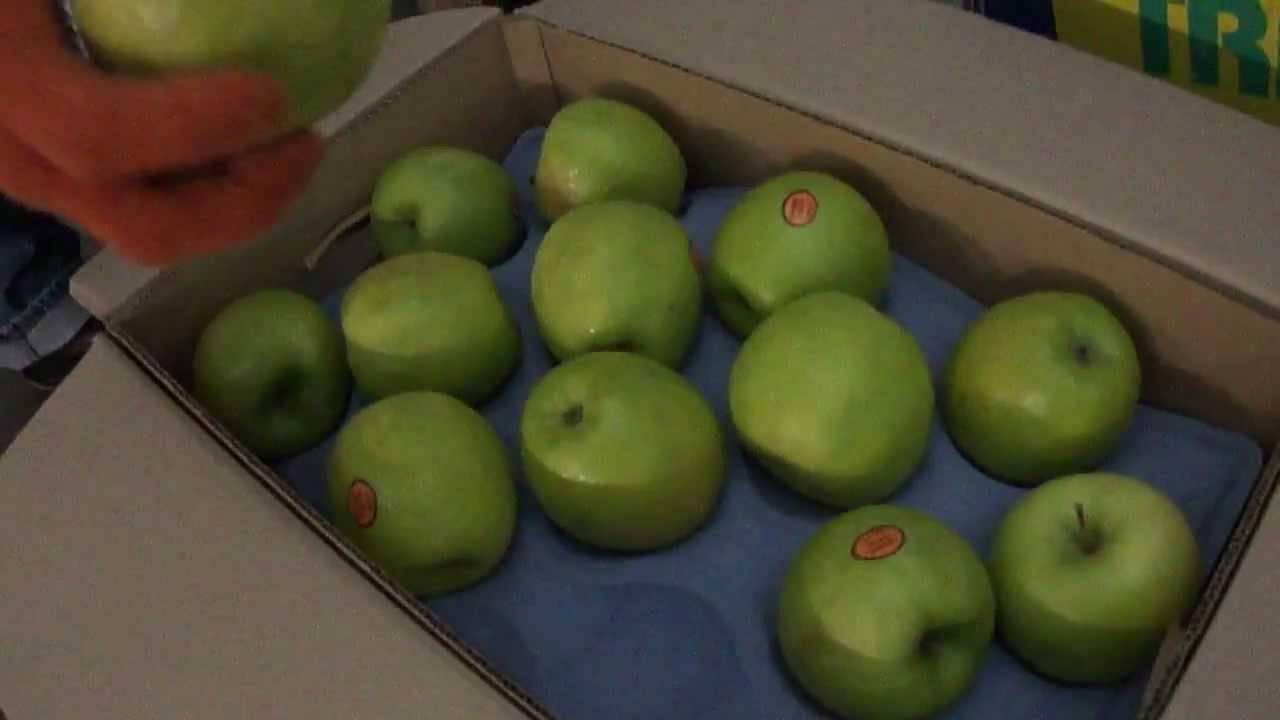 Яблоки гренни смит (granny smith) — описание яблони