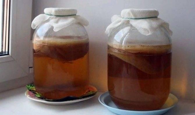 Чайный гриб: рецепты выращивания и полезные свойства | кулинария - всё pro еду!