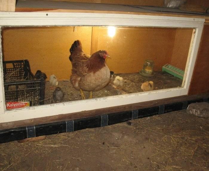 Кормушка для цыплят своими руками: пошаговая инструкция, фото и видео