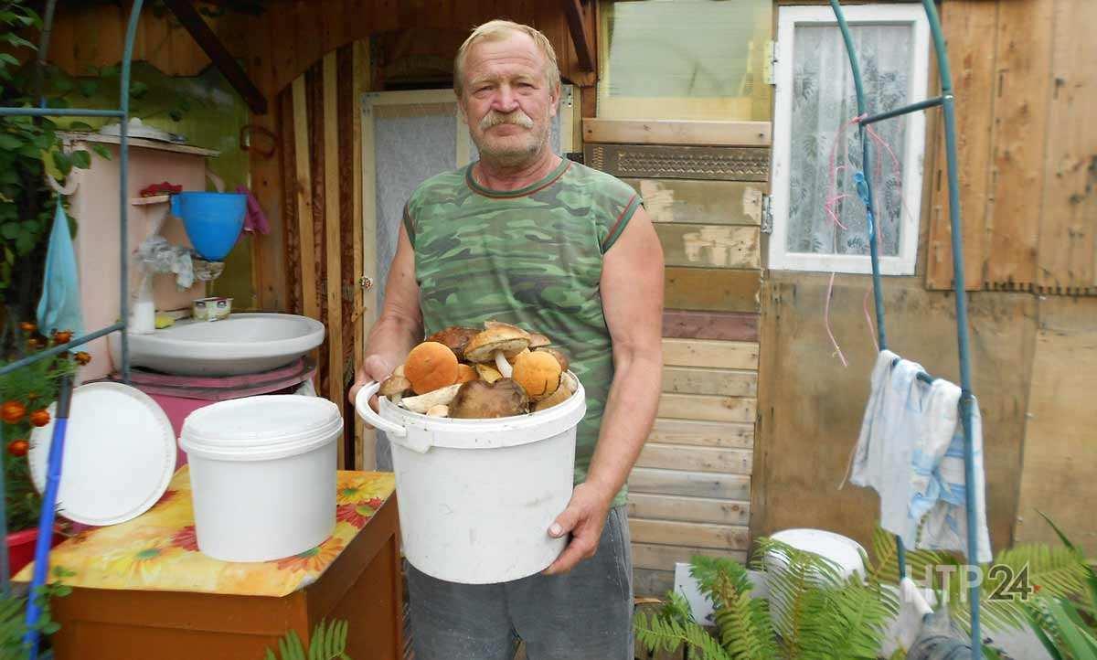 Грибник - все грибы с описанием и фото, рецепты и всё про грибы