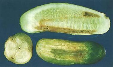 Себорейный дерматит - признаки, симптомы, лечение