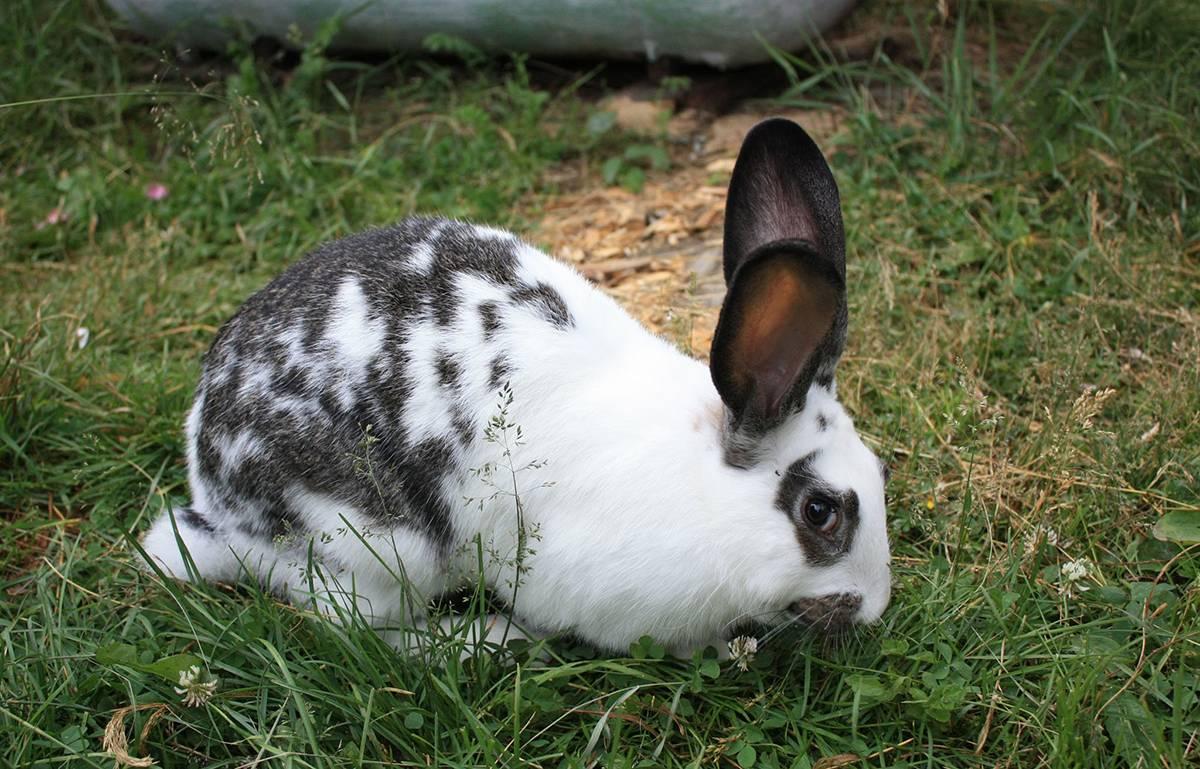 Выращивание и разведение кроликов как бизнес – выгодно или нет разводить на мясо и мех