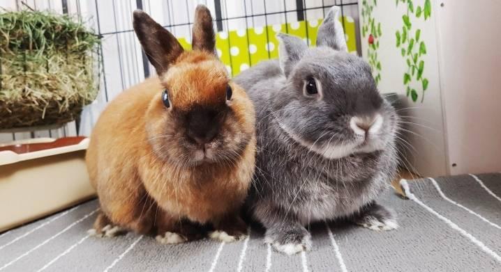Как правильно ухаживать за кроликами в домашних условиях